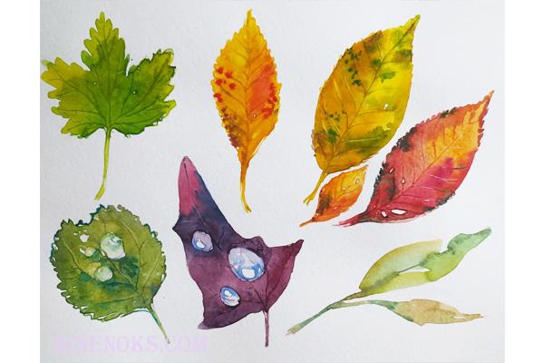 Листья и капли. акварель